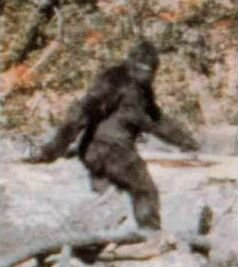 Frame from Patterson-Gimlin Film